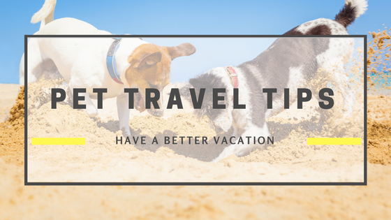 Pet Travel Tips:  How to Vacation with Your Best Friend